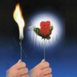Antorcha a Flor (Torch to Rose)